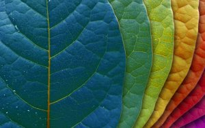 Pantone Leaves by Freecolorsource.com